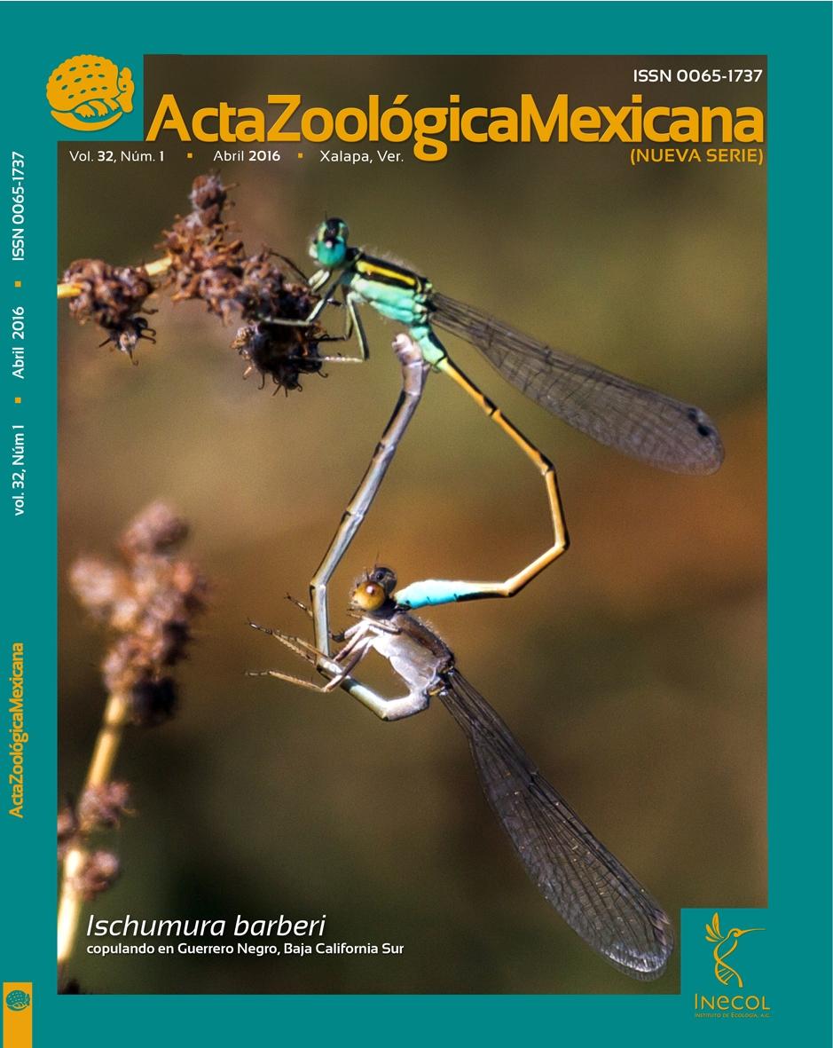 AZM 32(1) Coendou mexicanus